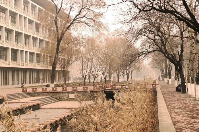 校园 意境 风景 感觉 一角 朦胧 雾