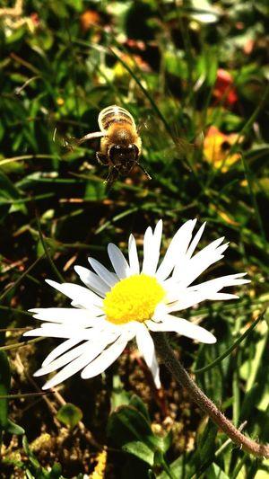 Bee Nature Bee