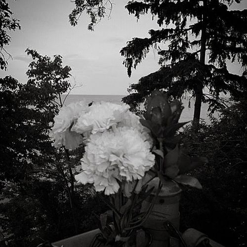 Flower Flowers BayVillage ColumbiaPark CuyahogaCounty CuyahogaCounty WesternBurbs WesternCuyahogaCounty Westside WestSideSuburbs Ohio Ohio Park Parks Picture Pictureoftheday LakeErie Lakes  GreatLake Greatlakes Blacknwhite Bkackandwhite Blacknwhite_perfection