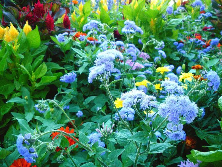 Outdoors Beauty Color Palette UW Madison Flower Pollen Colour Of Life