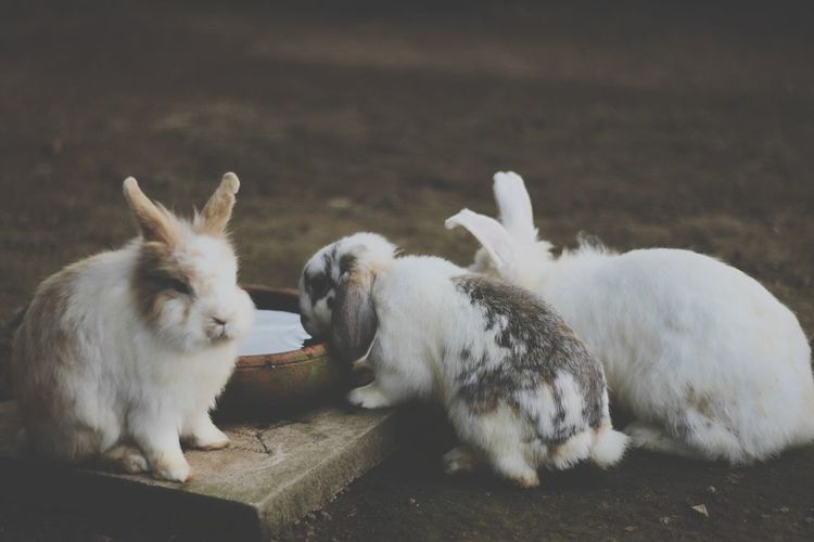 View of two bunnies