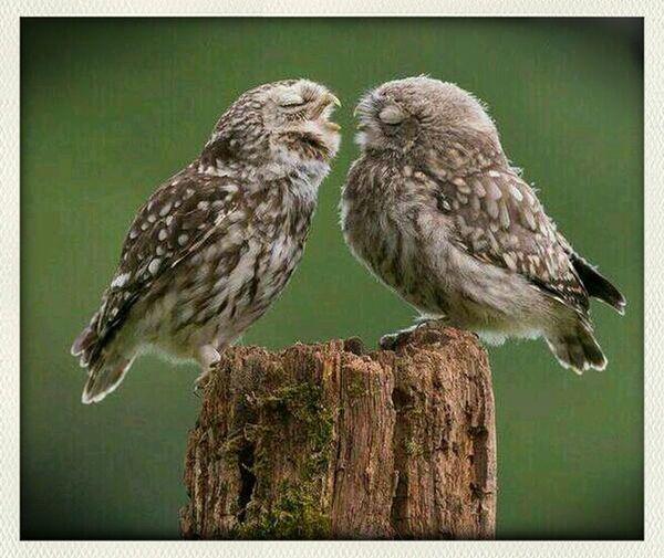 amor a primera vista ...