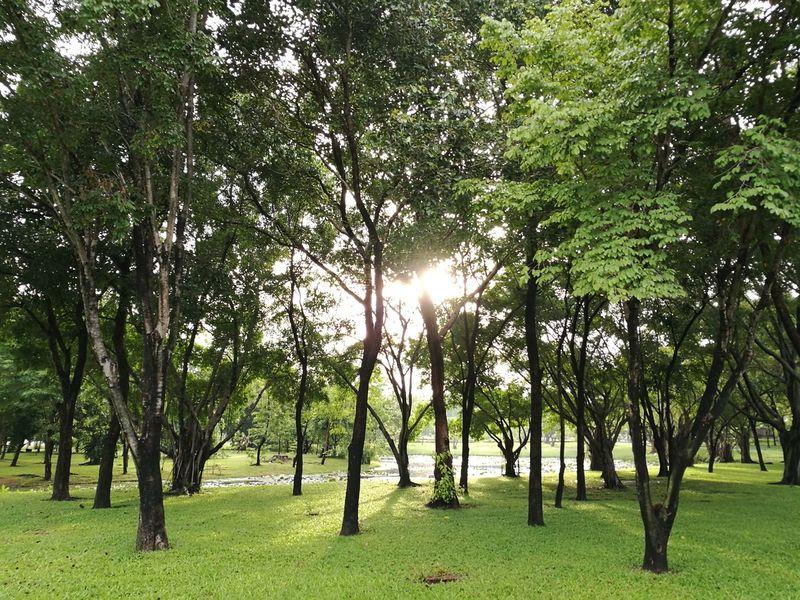 Natural Natural Light Trees Garden Park Public Park Outdoor Life Morning Light Morning Sun Morning Sunshine Morning Sunlight Grasses Huawei HuaweiP9 Oo Leica DualCamera Bangkok Thailand Out Of Camera Out Of Camera Jpeg Showcase July