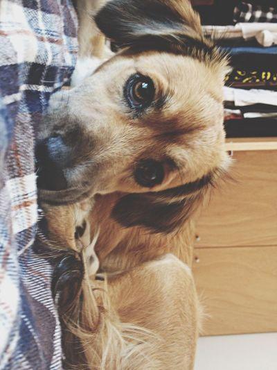 benny Puppy Love