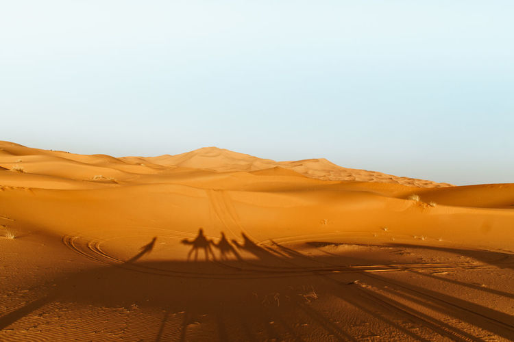 Shadow Of Camels And People On Sahara Desert