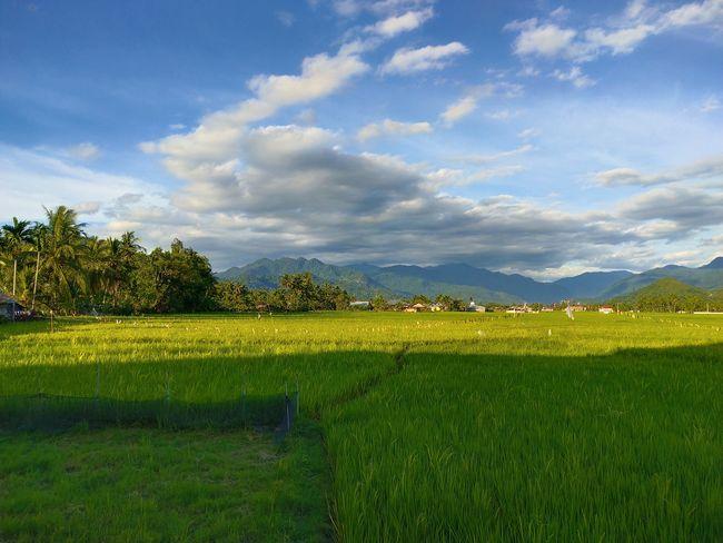 lubuak anau Lubuak Anau Tree Rural Scene Agriculture Field Sky Grass Landscape Cloud - Sky