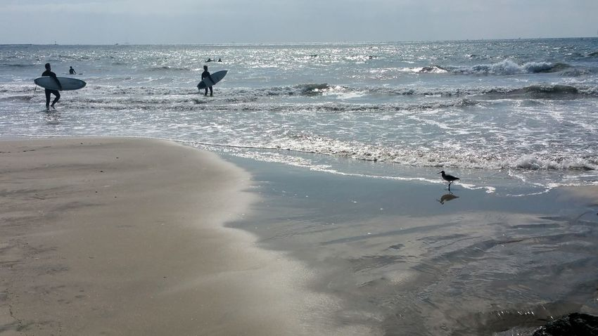 Beach Sea Wave Silhouette Sand Bird Water Horizon Over Water Dog Summer Surfing Animal Themes Two People People Nature Vacations Day Sunlight Sand Piper Motion Lost In The Landscape Mood Meditation Reflection Outdoors EyeEm Ready   Love Yourself California Dreamin