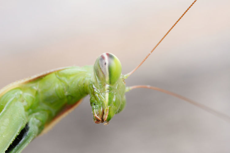 Close-up portrait of insect