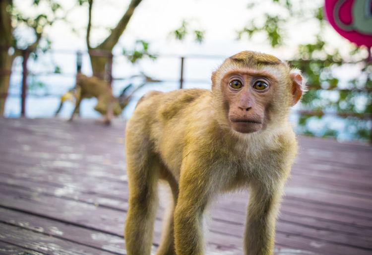 Portrait of monkey looking away outdoors