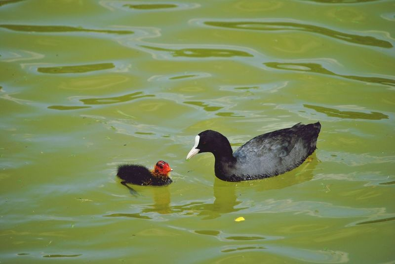 Bird Photography Mother & Child Water