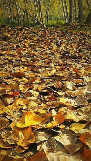 Otoño 🍁 Hugging A Tree Hello World Perputxent Collected Community 2015  Tardor/Autumn Autumn Colors Relaxing The Great Outdoors - 2016 EyeEm Awards CAMINS DE TARDOR BYOPaper! The Great Outdoors - 2018 EyeEm Awards The Traveler - 2018 EyeEm Awards