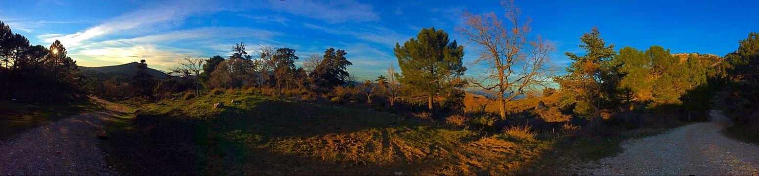 Sierra De Las Nieves SPAIN Winter Trees Mountain Countryside Malaga Ronda Andalucía Wood