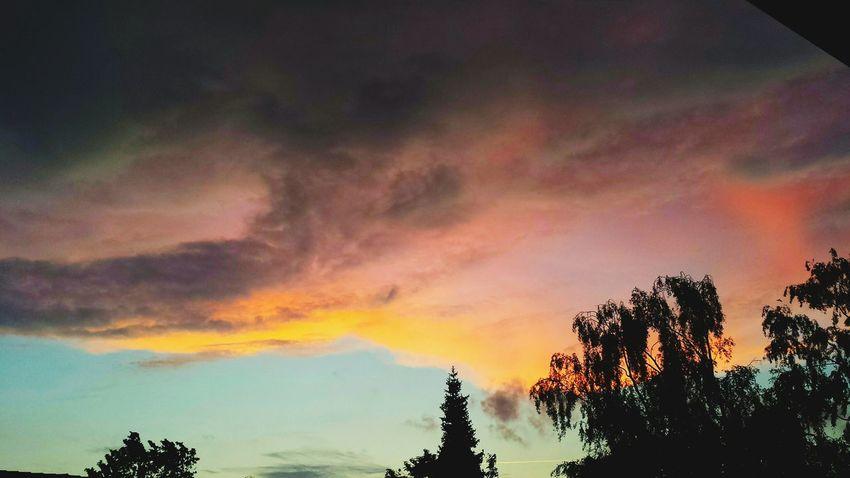 Sunset Tree Silhouette Sky Cloud - Sky Dramatic Sky Scenics Naturephotography Beautiful Nature Tranquil Scene Dramatic Sky Sunset_collection Naturelovers Low Angle View Epicsky Skyporn Sky Only Epic Shot Photography Awesome_shots Cloudporn Sky And Clouds Awesome_nature_shots Epicclouds Eye4photography  EyeEm Best Shots - Nature