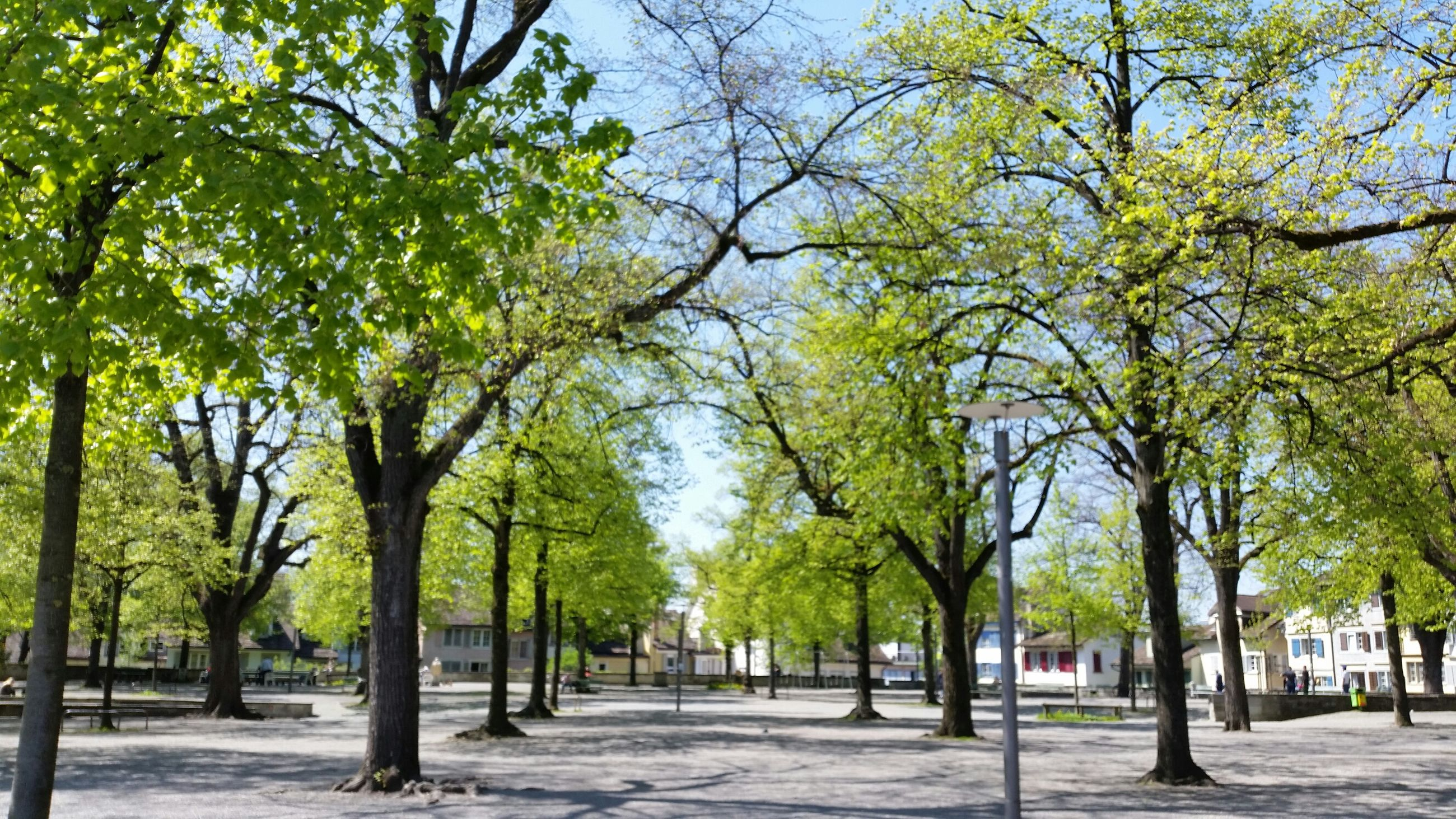 tree, the way forward, treelined, growth, tree trunk, branch, footpath, park - man made space, tranquility, road, nature, sky, green color, tranquil scene, street, shadow, beauty in nature, sunlight, transportation, diminishing perspective