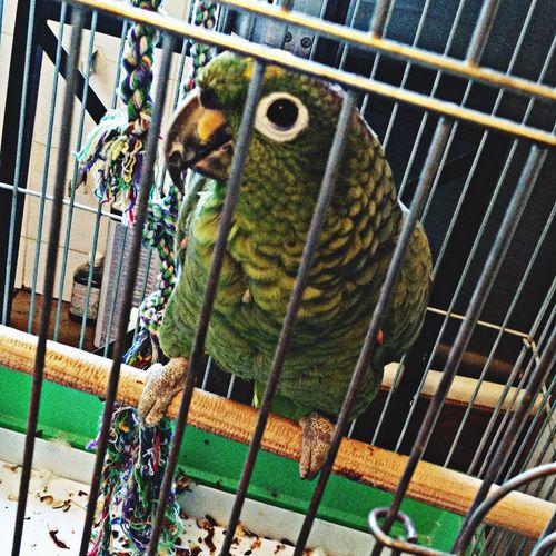 Parrot Beautiful Favorite