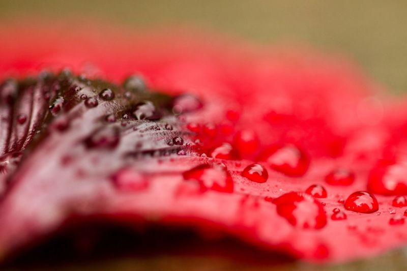 Waterdrops Red