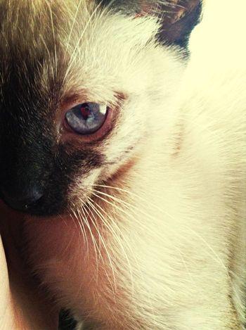 My crazy kitten Chester Pets My Babyboy Cutie