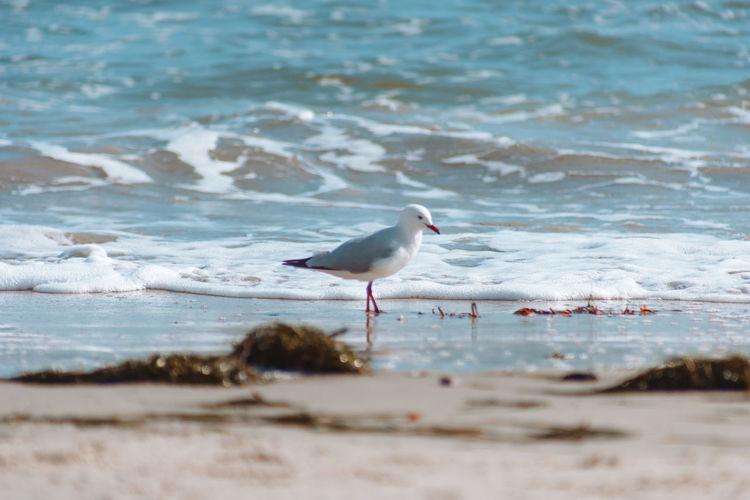 Seagull At Beach