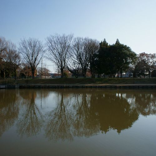 Reflection Water Trees And Sky Duck Sky Tree Bare Tree Tranquil Scene Tranquility Day Mizumoto Tokyo Japan