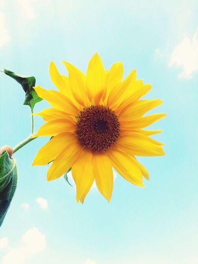 Holiday♡ Summer 2013 Słonecznik Yellow