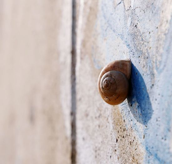 Spiral Spire  See The World Through My Eyes Nature Beauty Naturelovers Nature_perfection Nature Photography Perfectnature Close-up Snail Mollusk Gastropod Wall - Building Feature Day Shell Animal Shell Animal Animal Themes Wall Selective Focus Nature