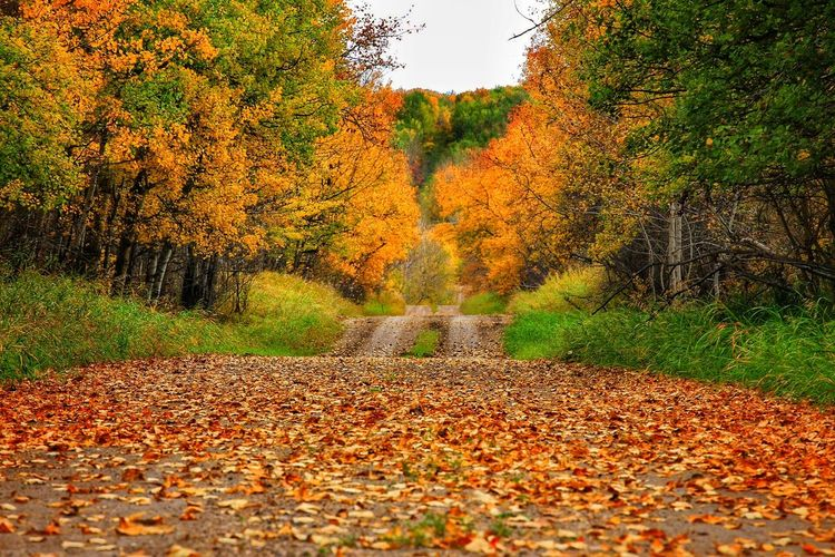 Autumn Season  Leaf Beauty In Nature Orange Color Scenics Nature Leaves Vibrant Color Non-urban Scene Fall Leaves Fallroadtrip Fall Tree Tranquil Scene Day First Eyeem Photo