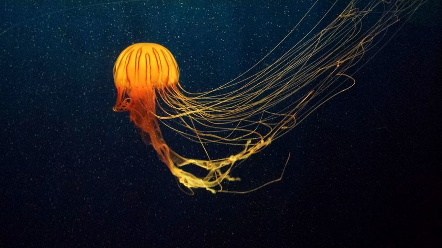 Close-Up Of Illuminated Jellyfish