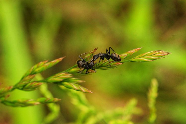 伝達者 野草 雑草 Macro Photography Botany 蟻 Insect Leaf Animal Themes Close-up Plant Ant