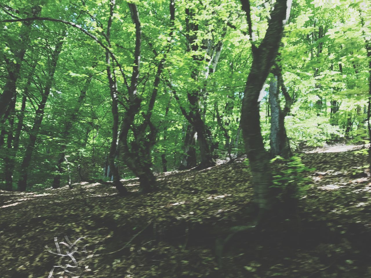 nature, tree, tranquility, forest, beauty in nature, tree trunk, tranquil scene, day, scenics, landscape, growth, outdoors, no people