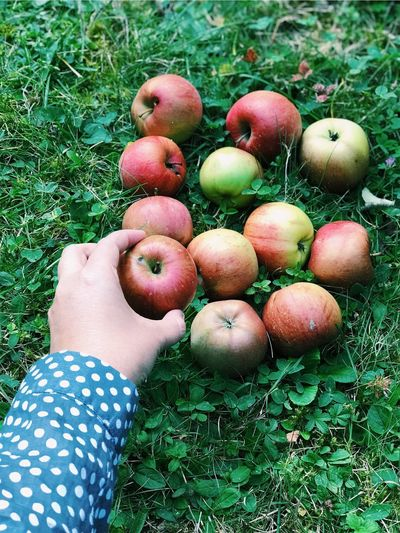 Grass Human Body Part One Person Fruit Day Outdoors Healthy Eating Food And Drink Freshness Apple - Fruit Green Color Human Hand People High Angle View Field Child Food Nature Close-up Children Only