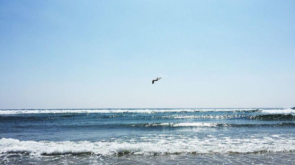 The Essence Of Summer Beach Seagull Ocean Atlantic Ocean Blue Summer Holiday
