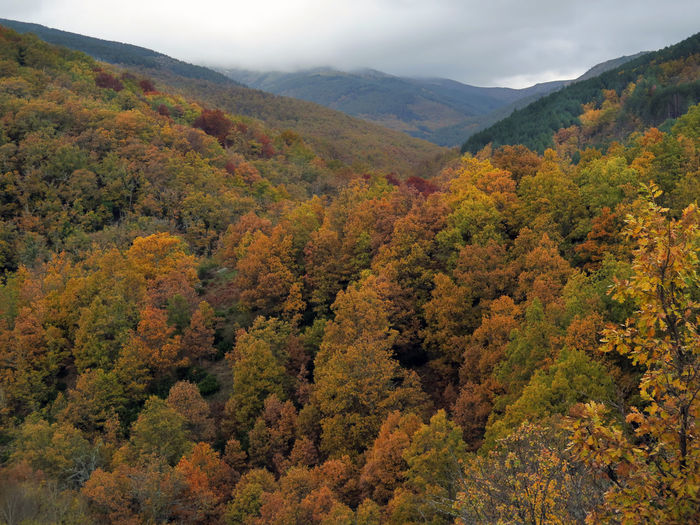 Scenic View Of Trees In Forest During Autumn
