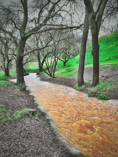 """Muddy Waters"" A rain swollen creek, often bone dry in Summer, angrily attack's its banks in an attempt to break the fragile bounds, in the Village Of Clayton, California. California Muddy Waters Water Green Swollen River Creeks Creekside Tree No People Day Nature Growth"