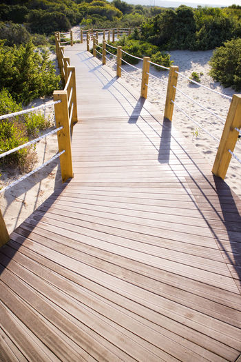Wood - Material Water Nature Tree Sunlight Plant No People Footpath Tranquility Day Empty The Way Forward Wood Paneling Wood Seat Shadow Boardwalk Railing Scenics - Nature Outdoors Diminishing Perspective