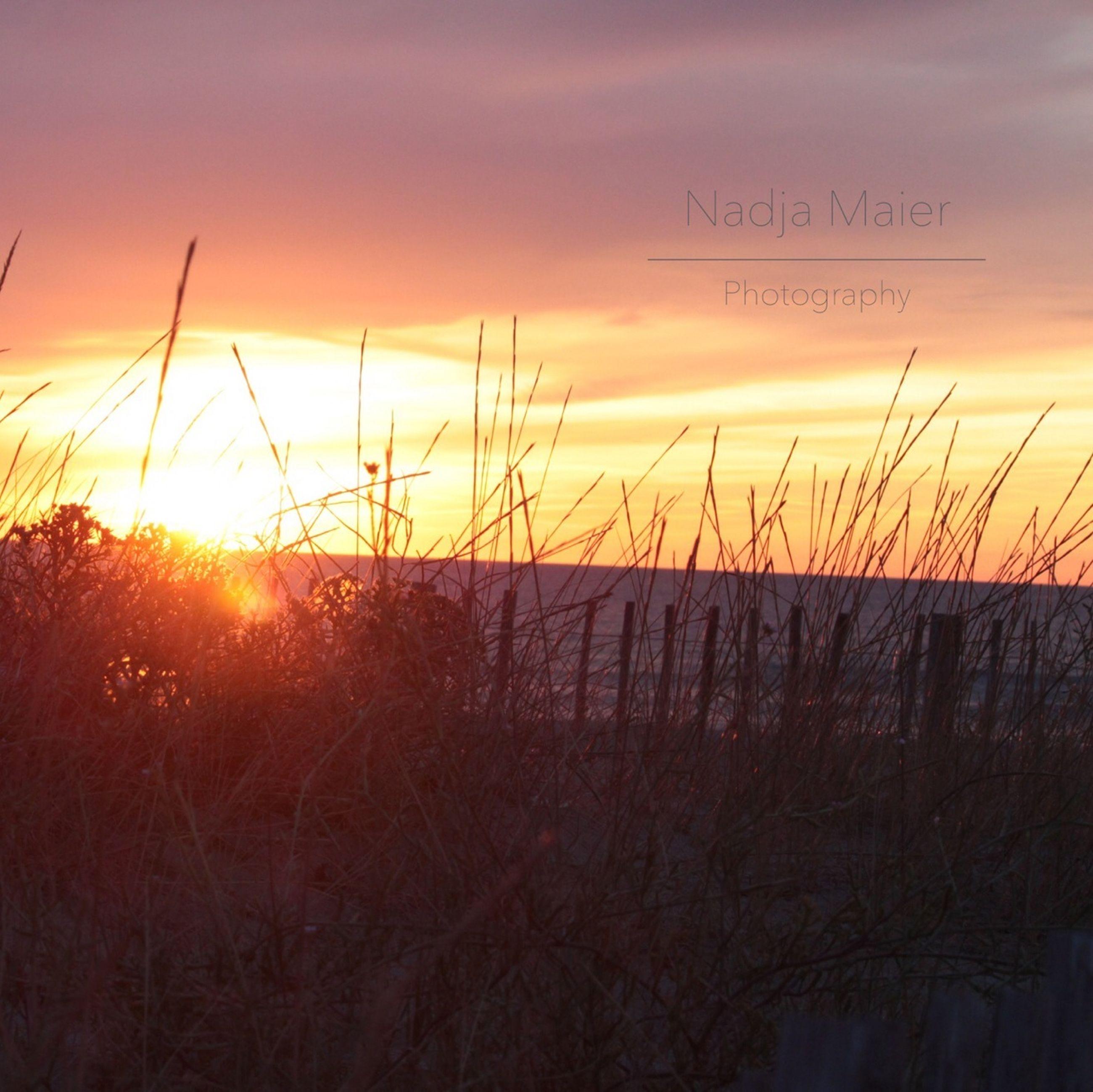 sunset, orange color, sun, scenics, tranquility, beauty in nature, tranquil scene, sky, nature, plant, idyllic, silhouette, sunlight, landscape, growth, field, outdoors, cloud - sky, no people, non-urban scene