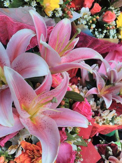 Team To Beat Flower shop Productendorsement Ele151px Nuartapp Color Ruleofthirds Bokeh