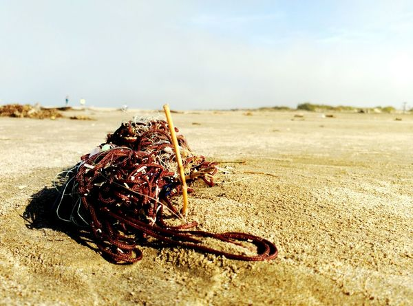 Leftovers Enjoying Life Sand & Sea Beachphotography Sand Platjaderiumar Catalonia Estiuetdesantmarti Catalunya Sunnyday☀️ Beaches <3 Deltadelebre Nature Learn & Shoot: Simplicity Showcase: November