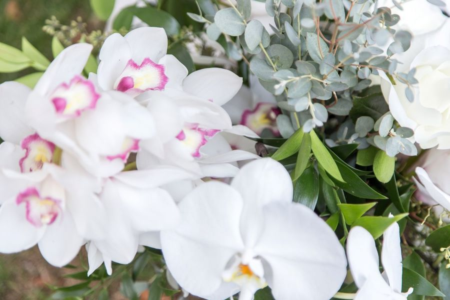 Orchids Flower Beauty In Nature White Color Fragility Nature Petal Freshness Growth Blossom Plant Flower Head No People Springtime Outdoors Day Close-up Pink Color Blooming Orchids Orchid Bouquet Bouquet Of Flowers