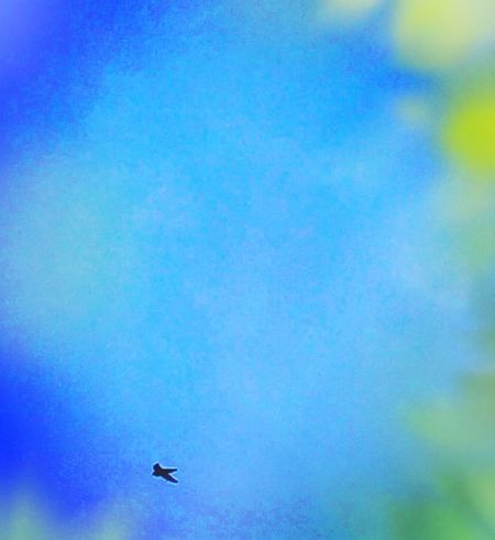 Bird Animal Photography Colorful Dreaming Iphonephotography Blue Series EyeEm Gallery EyeEm Nature Lover