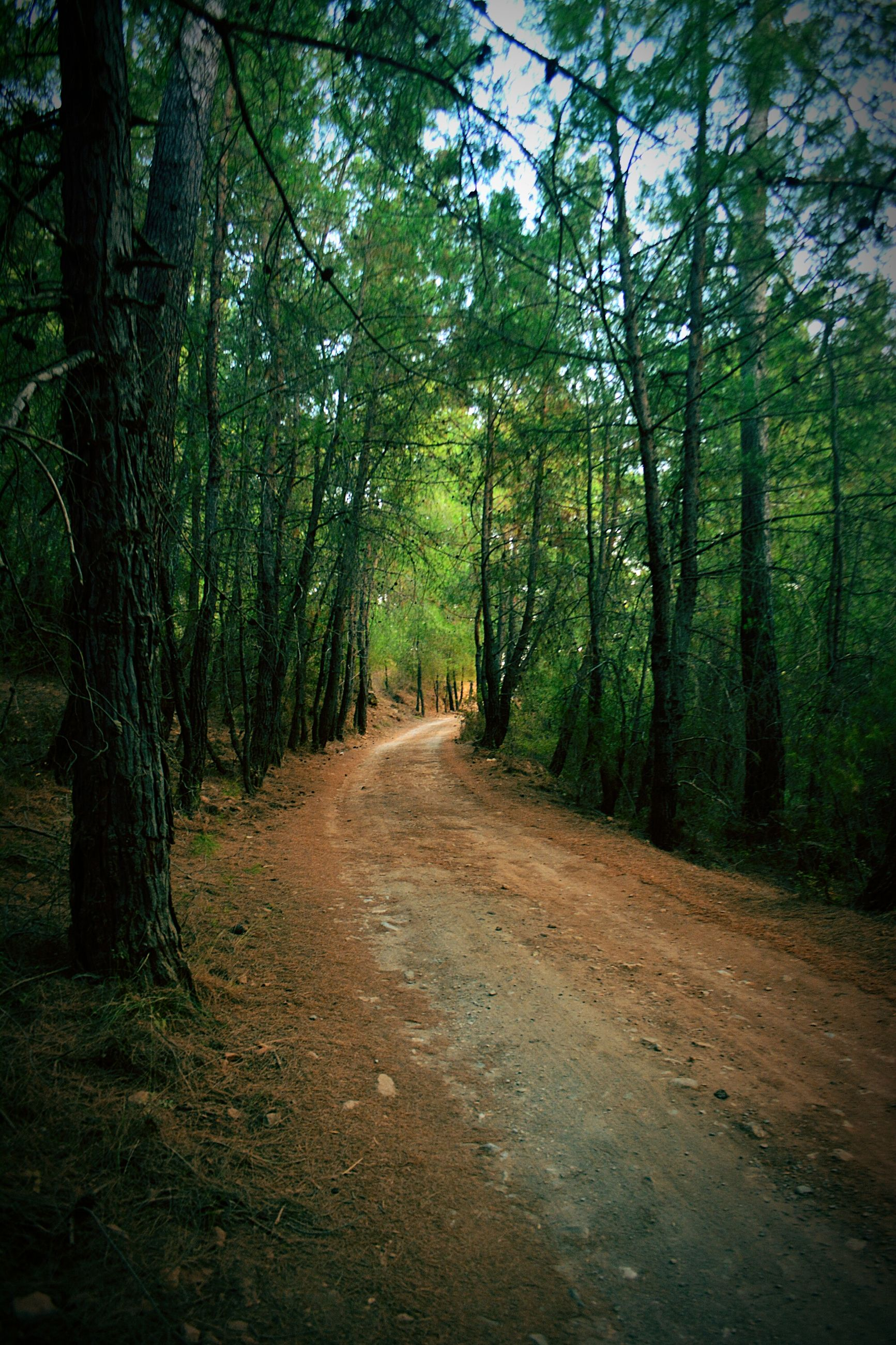 tree, forest, nature, the way forward, woodland, tranquility, tranquil scene, road, outdoors, beauty in nature, day, scenics, no people, landscape