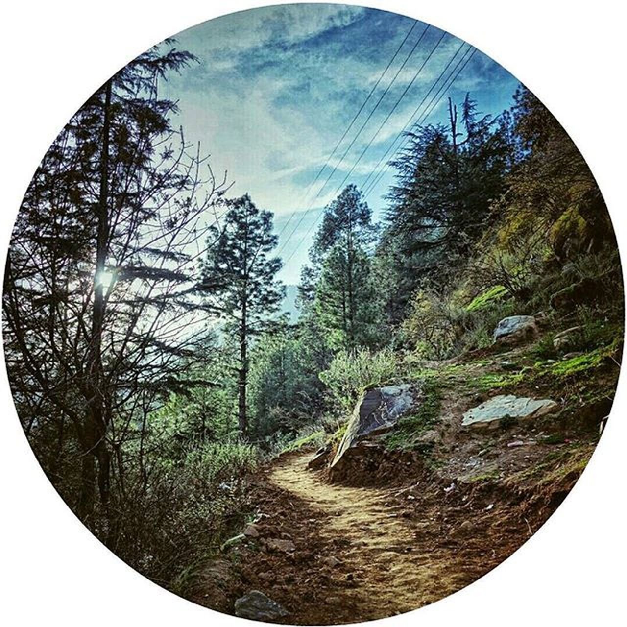 tree, plant, sky, nature, no people, day, reflection, geometric shape, circle, tranquility, tranquil scene, land, scenics - nature, forest, beauty in nature, shape, growth, fish-eye lens, outdoors, transparent, digital composite, coniferous tree