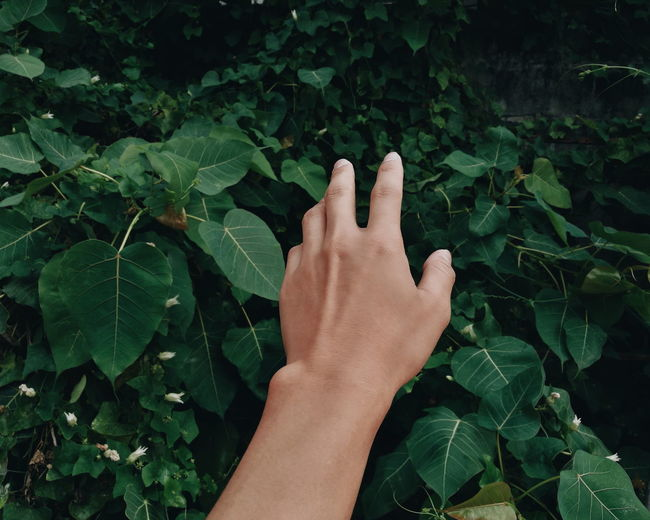 Hand Handsome Outdoors Architecture Natural Love Green Background Day Human Hand Leaf Personal Perspective Close-up Green Color