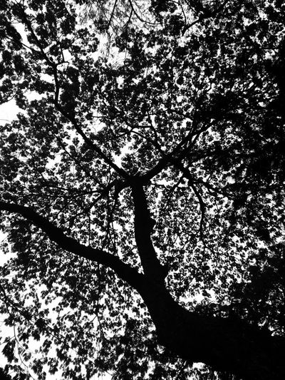 Shadow Silhouette Beauty In Nature Goa Black And White Collection  Black And White Collection
