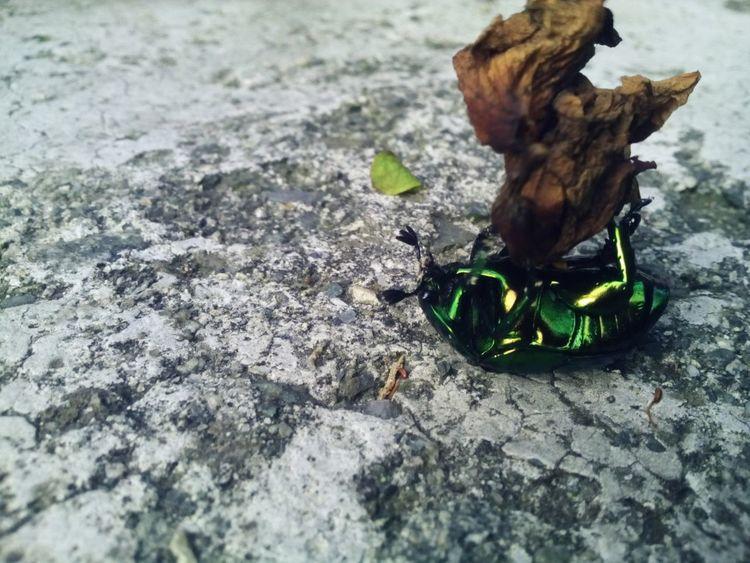 Bug Relaxing