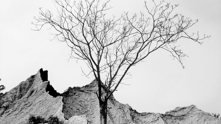 Tree Silhouette Branch Spooky Nature Bare Tree Bird No People Outdoors Day Sky 草山月世界 Black And White