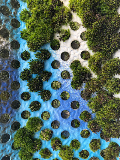 High angle view of moss on rock