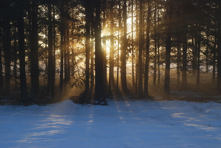 Sun Through Trees Beauty In Nature Cold Temperature Day Forest Landscape Nature No People Outdoors Scenics Sky Snow Sun Setting Tranquil Scene Tranquility Tree Winter