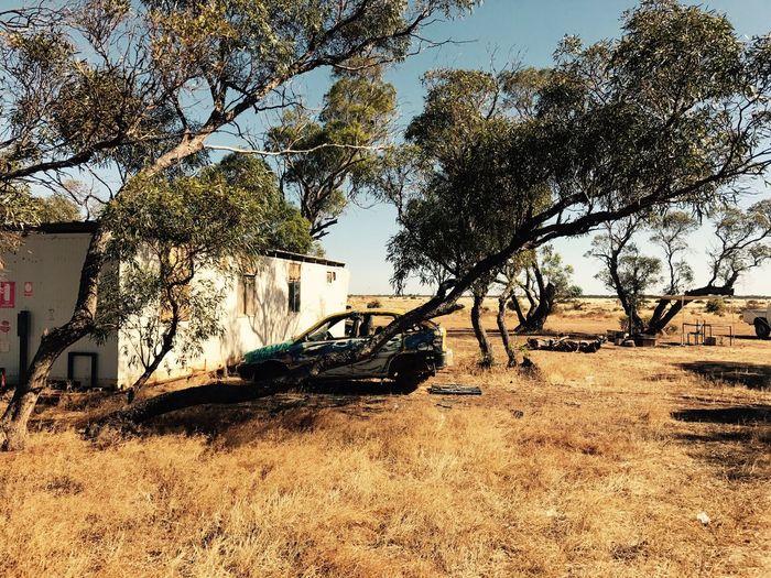 Annadale. SA, 🇦🇺 , on a Farm. Day Clear Sky Outdoors Nature Farm Australia Range Summer Iphonephotography IPhoneography IPhone IPhone 7+ IPhone 7 Plus