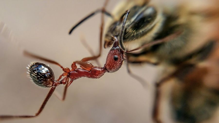 Close-Up Of Insects