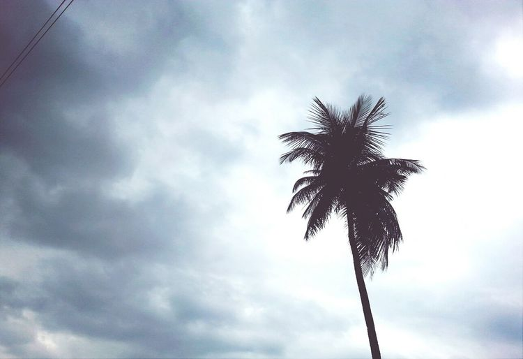 Tropics Skies